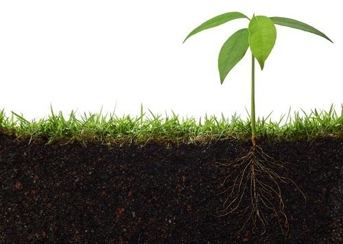Почвенная утилизация: альтернатива сбросу стоков в водоем и польза для растений